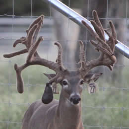 Deer Fence company in Texas